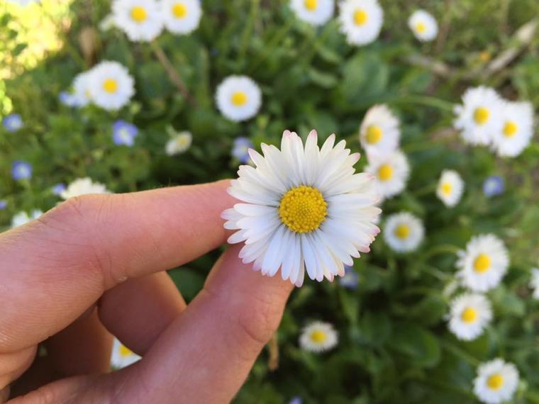 I ove Spring 1